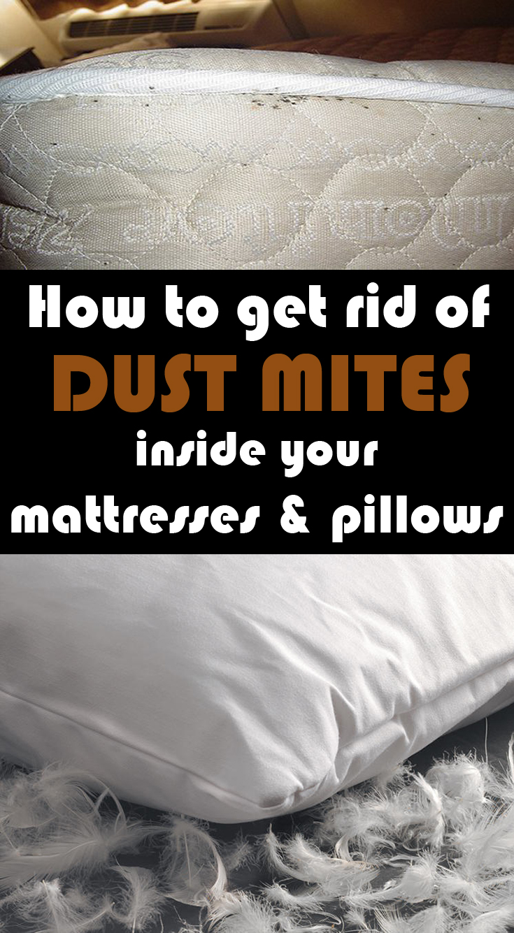 how to get rid of dust mites inside your mattresses and