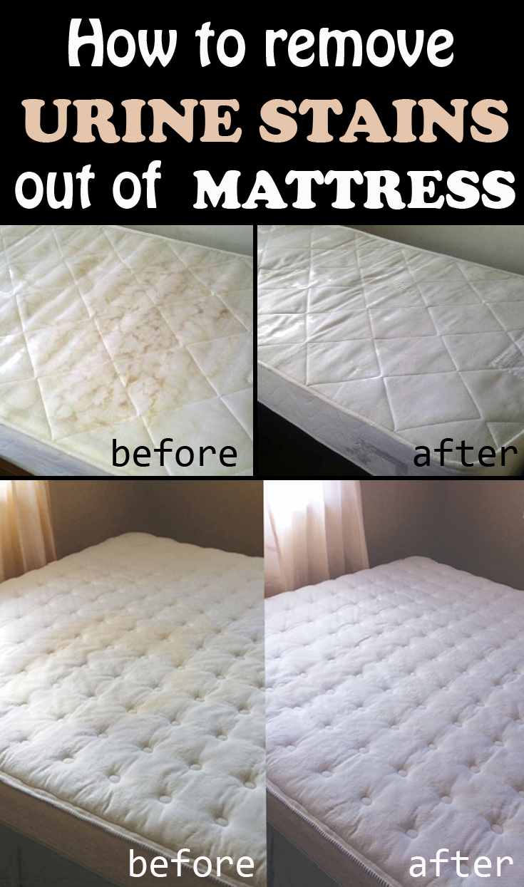 Urine Stains Out Of A Mattress How To Remove Urine Stains