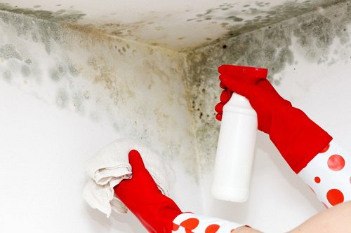 3 tricks to get rid of mold