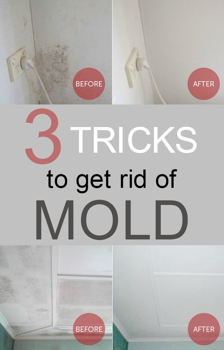 How To Get Rid Of Mold In The Bathroom 28 Images How To Get Rid Of Mold Bath How To And Tips