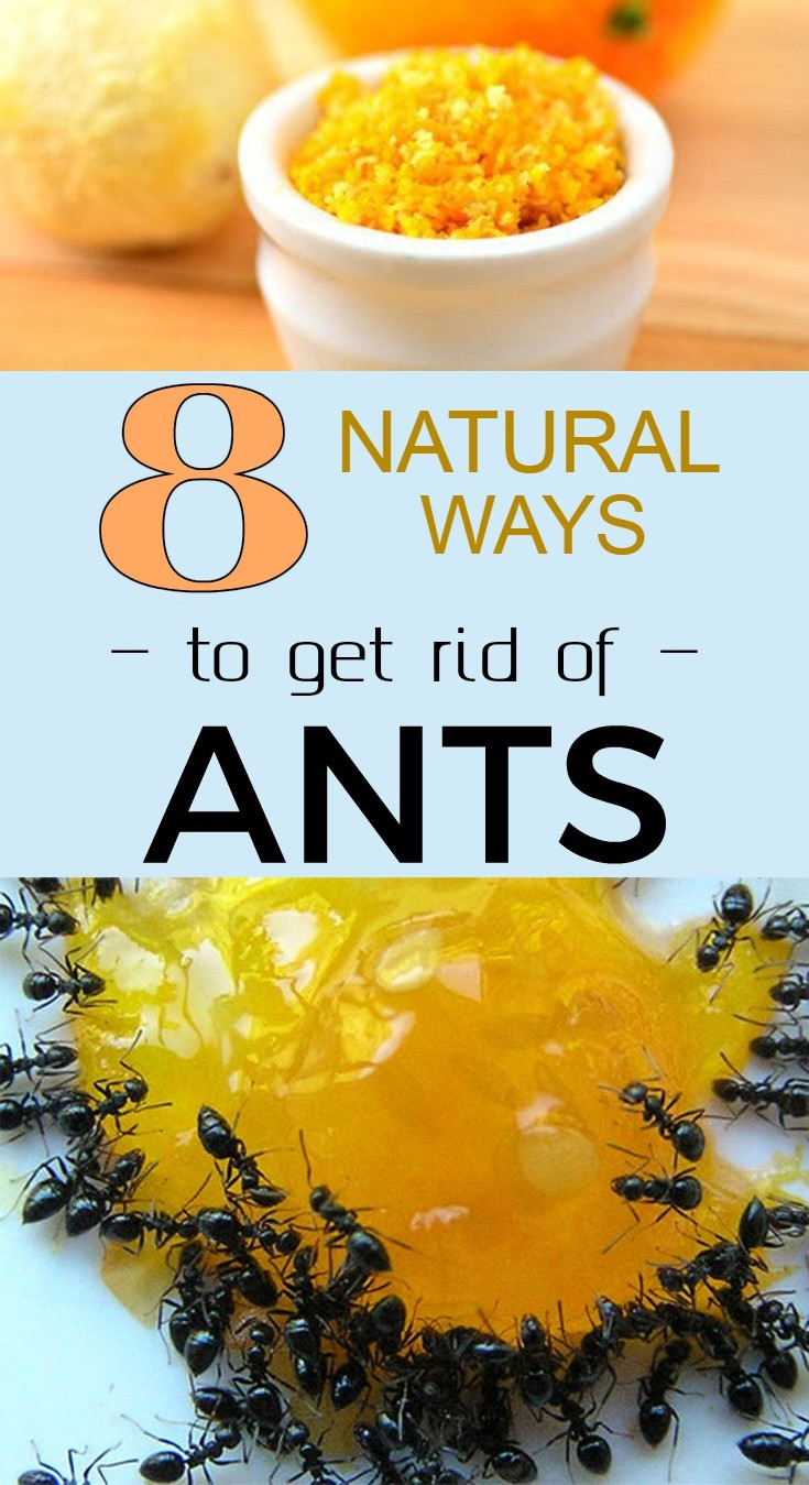 Natural Way Of Getting Rid Of Carpenter Ants