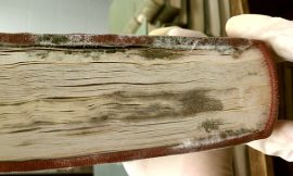 How to remove mold off your library and off your books
