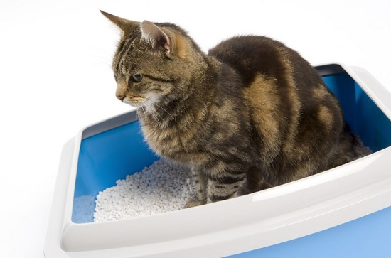 Keep Odor Away – How To Clean A Cat's Litter Box Quickly