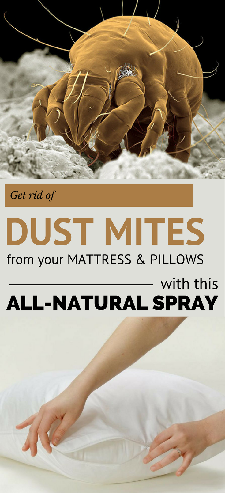 Get Rid Of Dust Mites From Your Mattress And Pillows With