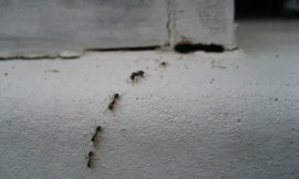 How To Get Rid Of Ants In Your Home Using The Best Homemade Natural Repellent Spray