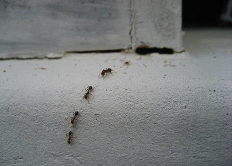 How To Get Rid Of Ants In Your Home Using The Best