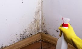 How To Get Rid Of Black Mold In Your House Without Chemicals