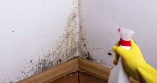 How to get rid of mold and damp stains - Get rid limestone stains ...