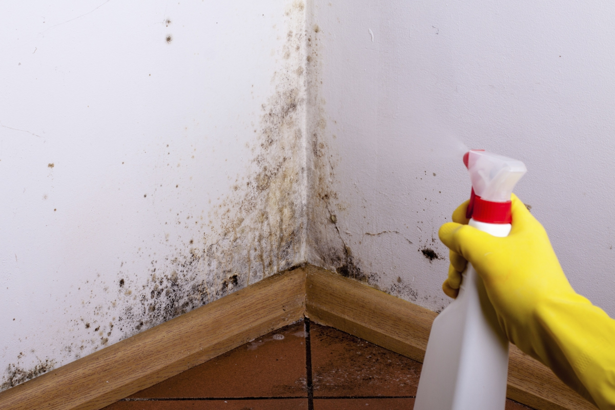 how to kill mold in your house