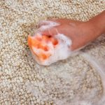 Less Gross Method To Remove Poop Stains Out Of The Carpet